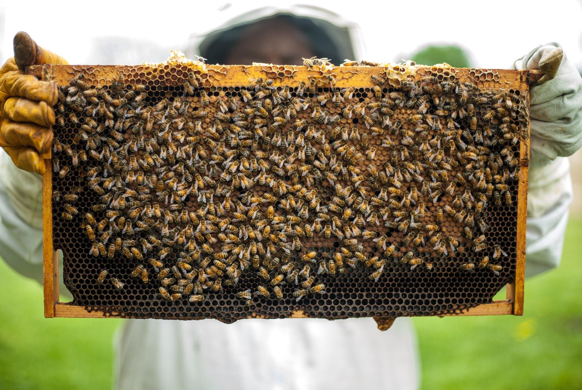 raw honey vs manuka honey